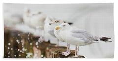 European Herring Gulls In A Row  Beach Towel