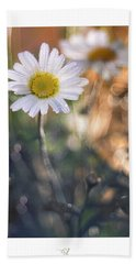 Evening Daisy Beach Towel