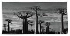 evening under the baobabs of Madagascar bw Beach Towel