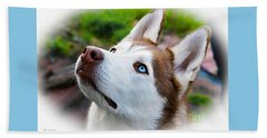 Expressive Siberian  Husky Photo C62017 Beach Towel