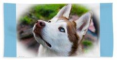 Expressive Siberian  Husky Photo C62017 Beach Sheet