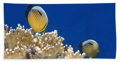 Exquisite Butterflyfish And Corals 3 Beach Sheet