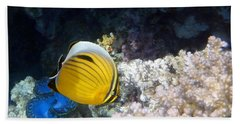 Exquisite Butterflyfish And Giant Red Sea Clam Beach Towel