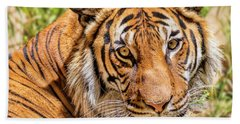 Eyes Of A Tiger Beach Towel