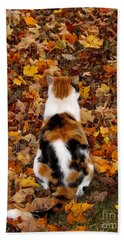 Fall Catitude  Beach Towel by Christy Ricafrente
