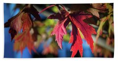 Fall Color 5528 19 Beach Sheet by M K  Miller