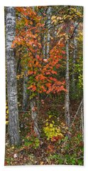 Fall Color At Gladwin 4543 Beach Towel