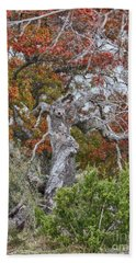 Fall Colors Once Again Beach Towel