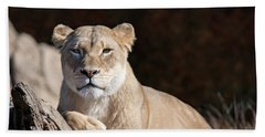 Fall Lioness Beach Towel