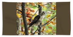 Fall Red-tailed Hawk Beach Towel