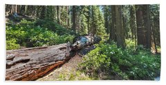 Fallen Tree- Beach Towel