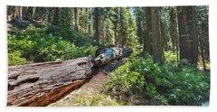 Fallen Tree- Beach Towel
