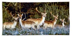 Fallow Deer In England Beach Sheet by Chris Smith