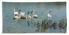 Family Of Swans Beach Towel