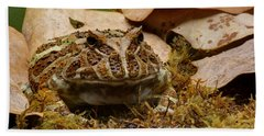 Beach Towel featuring the photograph Fantasy - Horned Frog by Nikolyn McDonald