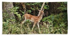 Beach Towel featuring the photograph Fawn In The Woods by Rick Friedle
