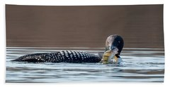Feeding Common Loon Square Beach Sheet by Bill Wakeley