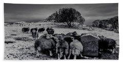 Beach Sheet featuring the photograph Feeding Time by Keith Elliott