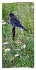 Female Bluebird Beach Sheet