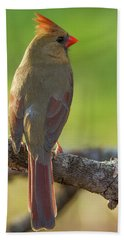 Beach Towel featuring the photograph Female Cardinal by David Waldrop