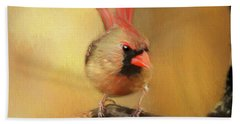 Female Cardinal Excited For Spring Beach Sheet by Darren Fisher