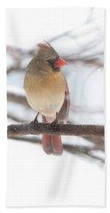 Female Cardinal In Snow Beach Towel
