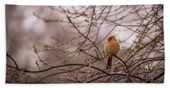 Beach Sheet featuring the photograph Female Cardinal In Spring 2017 by Terry DeLuco