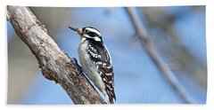 Beach Towel featuring the photograph Female Downey Woodpecker 1104  by Michael Peychich