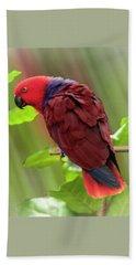 Female Electus Parrot  Beach Towel