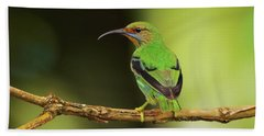 Female Green Honeycreeper At Trinidad's Asa Wright Beach Towel