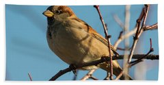 Female House Sparrow Beach Sheet by Mike Dawson