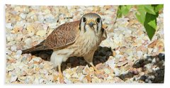 Female Kestrel Falcon Beach Towel
