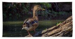 Female Mallard Duck II Beach Towel