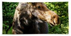 Female Moose At Jackson Hole Beach Sheet