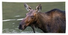 Beach Towel featuring the photograph Female Moose Head by James BO Insogna
