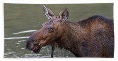 Beach Towel featuring the photograph Female Moose Head Shot by James BO Insogna
