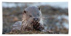 Female Otter Eating Beach Towel