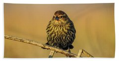 Female Red-winged Blackbird  Beach Towel