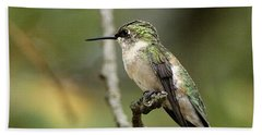 Female Ruby-throated Hummingbird On Branch Beach Sheet by Sheila Brown