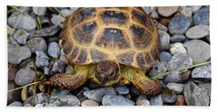 Female Russian Tortoise Beach Towel