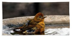 Female Summer Tanager In Bird Bath Beach Sheet