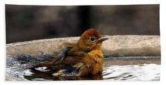 Female Summer Tanager In Bird Bath Beach Towel