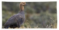 Female Upland Goose Beach Towel