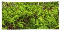 Ferns And Birch In Soft Light Beach Sheet