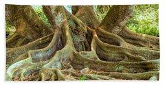 Ficus Roots Beach Sheet