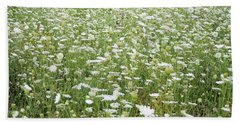 Field Of Queen Annes Lace Beach Sheet