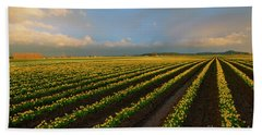 Beach Towel featuring the photograph Fields Of Yellow by Mike Dawson
