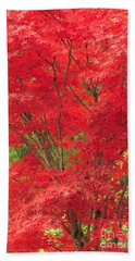 Fiery Japanese Maple Beach Towel