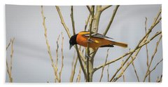 Beach Towel featuring the photograph First Baltimore Oriole Of The Year  by Ricky L Jones