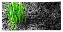 First Green Shoots Of Spring And Dirt Beach Sheet